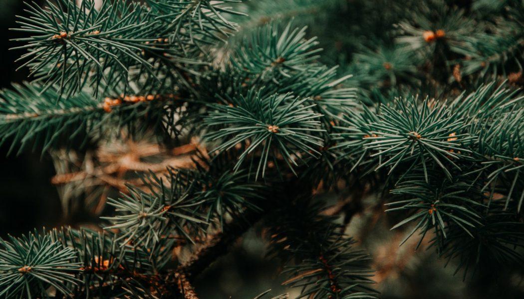 Christmas tree news!