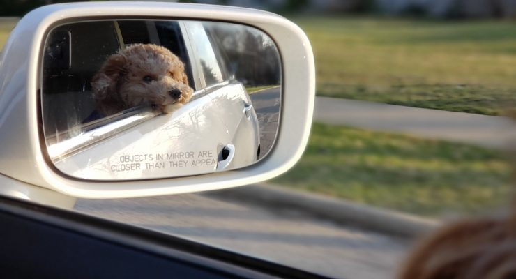 4 benefits of having your pet on the road
